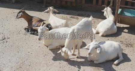 closeup animal animais agricultura campo suave