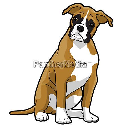 boxer filhote de cachorro animal mascote