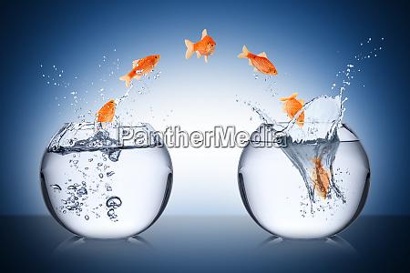conceito da mudanca dos peixes