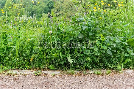 naturaleza prado plantas natural hierbas hojas