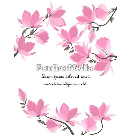 flores de magnolia vetorial