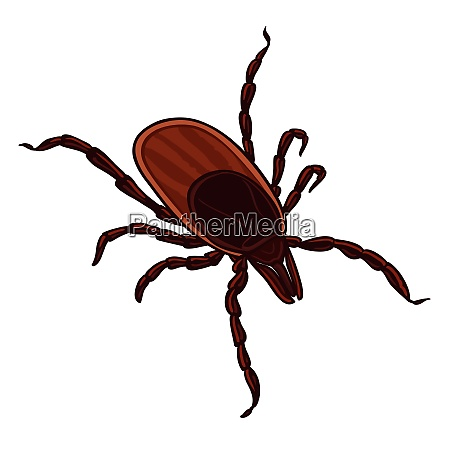 tick isolated on white background tick