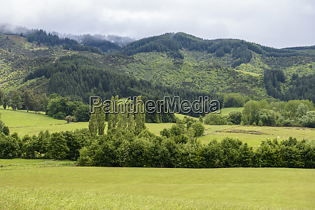 green fields in kakahu new zealand