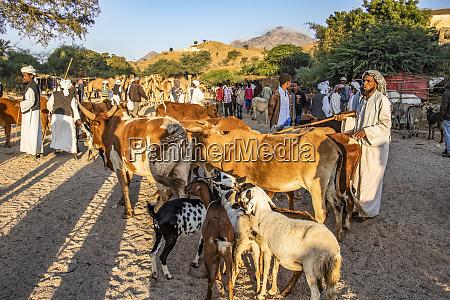 gado no mercado de gado de