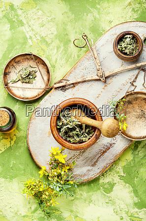 planta medicinal hypericum