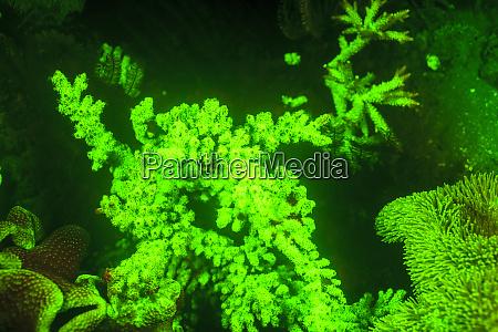 vida, marinha, subaquática, perto, do, aeroporto - 27328486