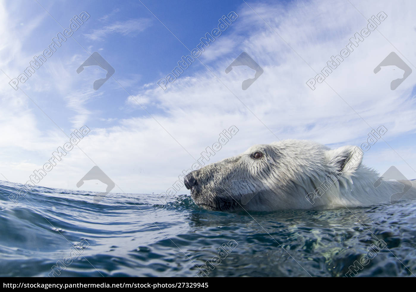 canada, , nunavut, territory, , repulse, bay, , close-up - 27329945