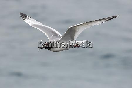 ecuador galapagos national park swallow tailed