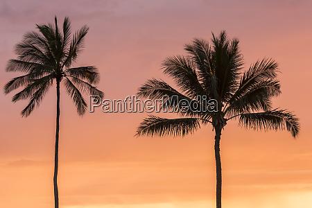 usa hawaii kauai lawai palm trees