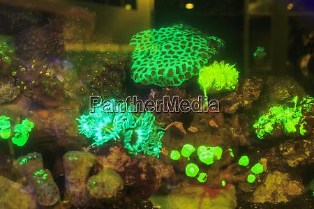 aquarium with fluorescing corals las vegas