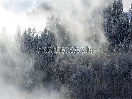 Árvores, na, névoa, com, luz, da - 27348418