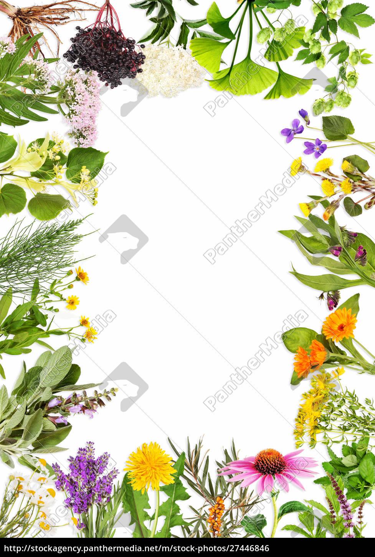 quadro, com, as, principais, plantas, medicinais - 27446846