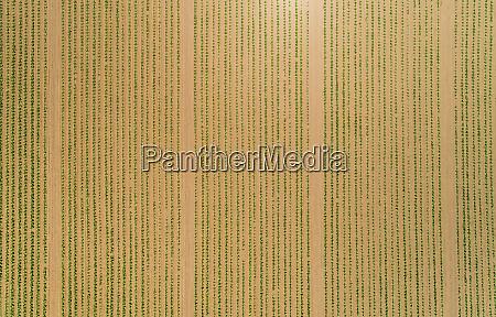 ID de imagem 27454573