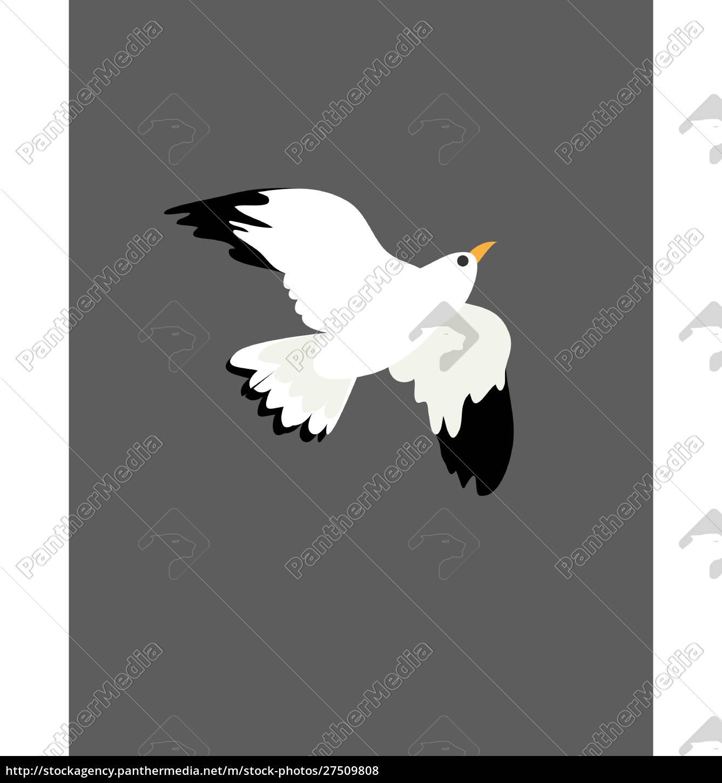retrato, do, pássaro, gaivota, no, vôo, no, vetor - 27509808