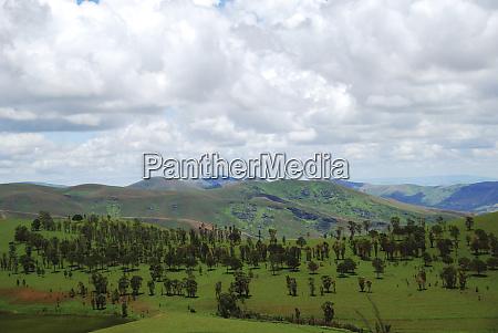 interior de madagascar reflorestamento nas colinas