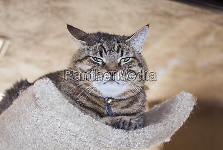 gato infeliz
