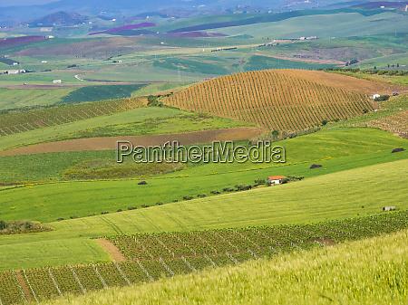 italia sicilia trapani campo de alcamo