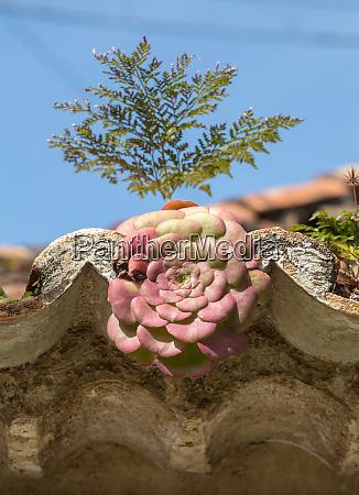 plantas suculentas em miniatura crescendo em