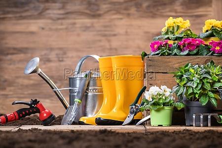 ferramentas e flores de jardinagem