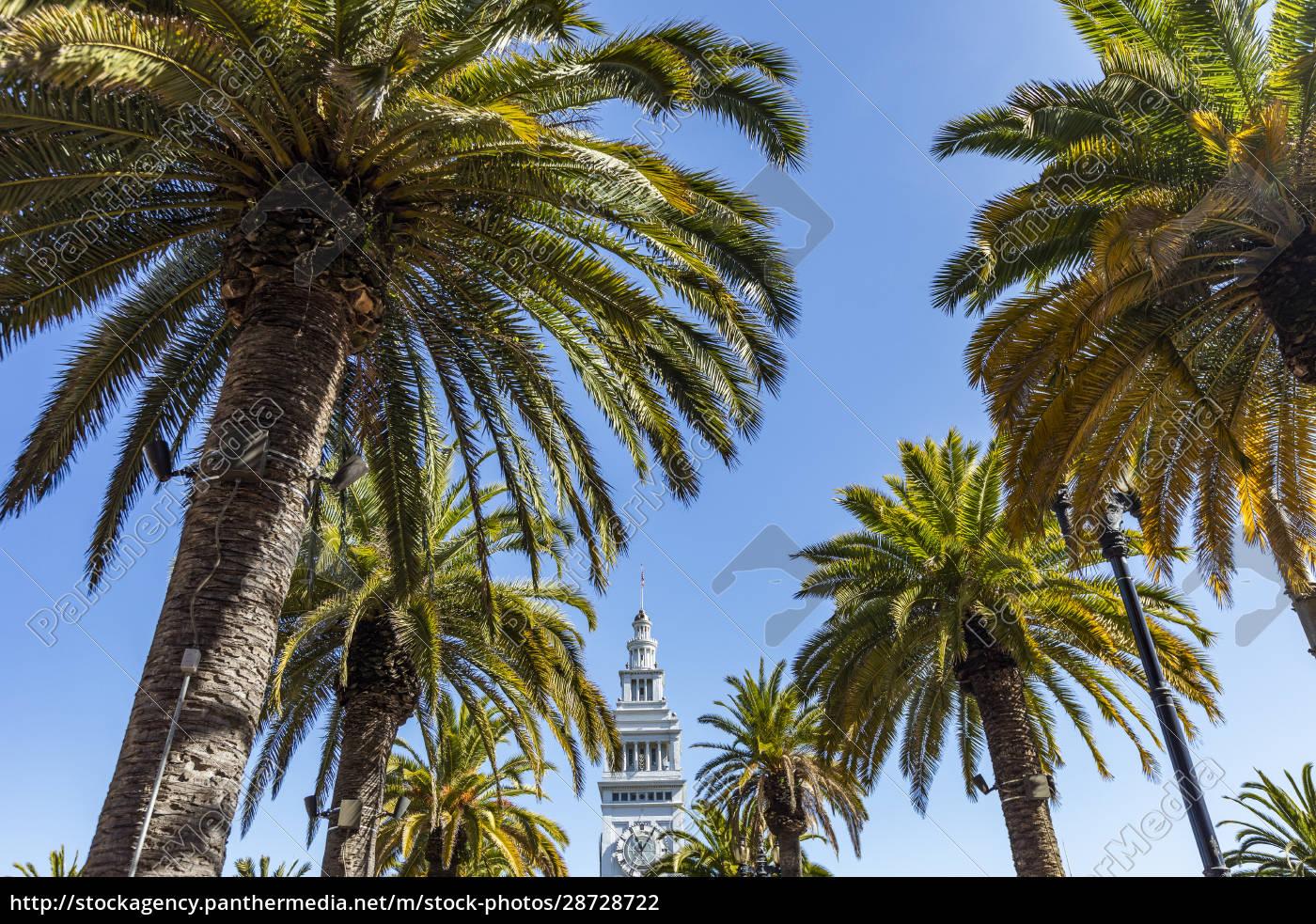 eua, califórnia, são, francisco, palmeiras, e, topo, da, torre - 28728722