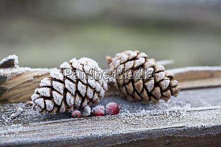hygge christmas winter still life
