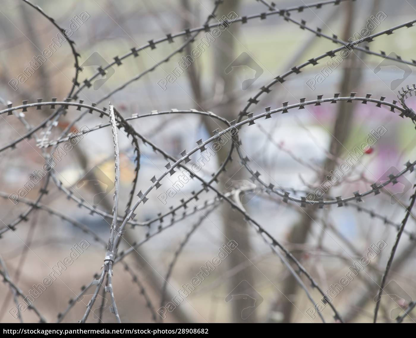 barbed, wire, fence, at, the, border - 28908682
