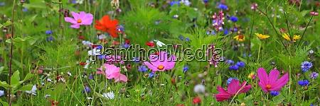 prado, de, flores - 28929736