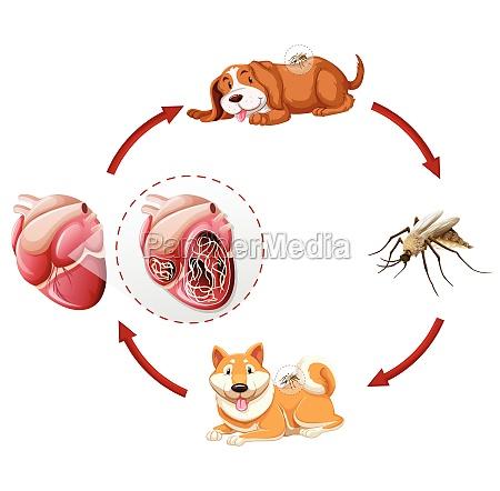 gráfico, do, ciclo, de, vida, do - 30211711