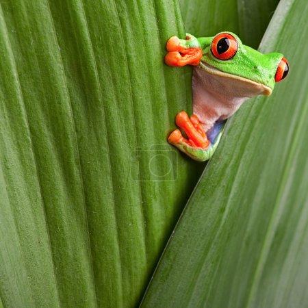 verde, Vermelho, Contexto, macro, close up, Folha - B8605813
