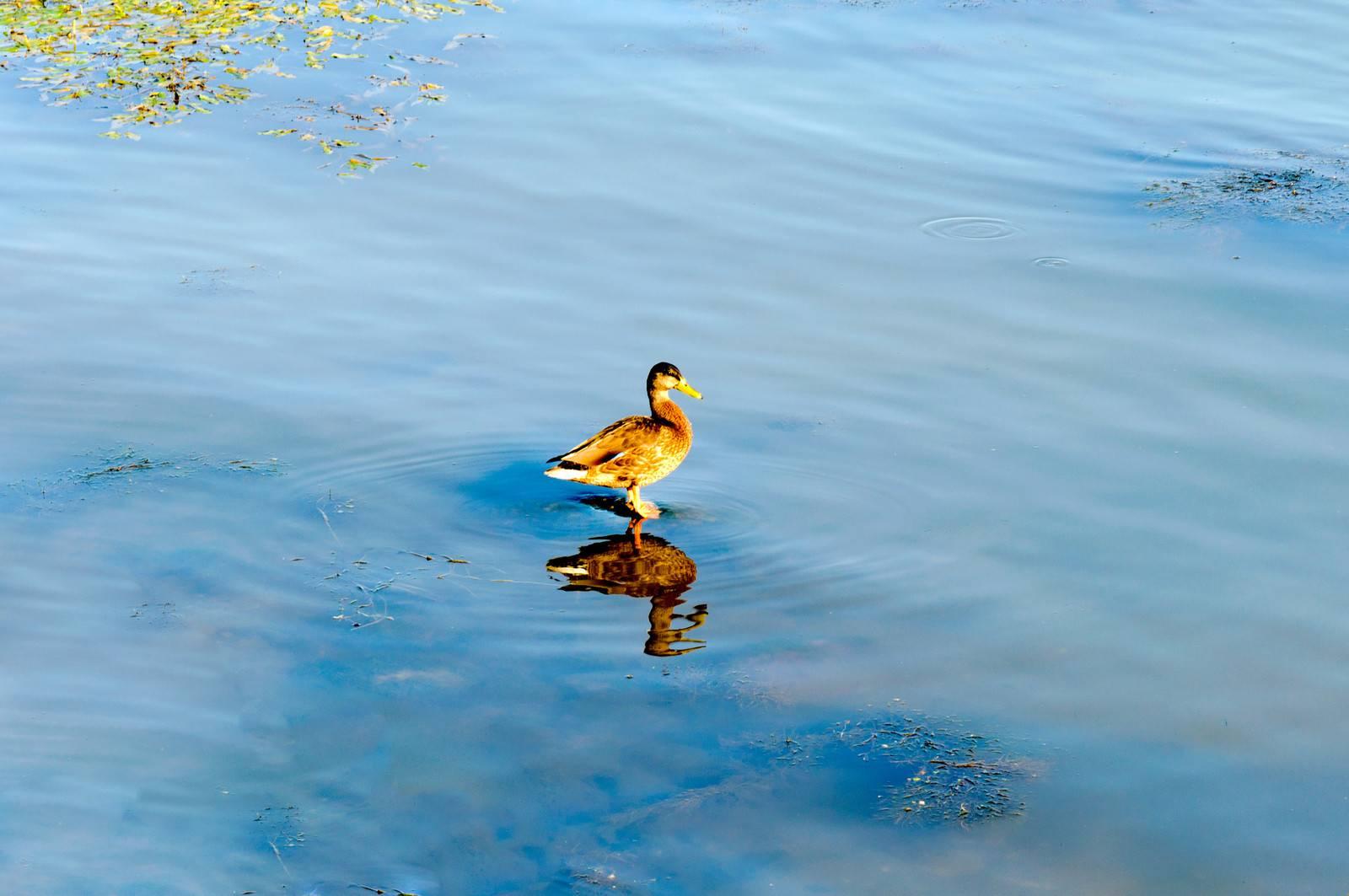 animal, aquatic, avian, beak, bird, blue - D10456944