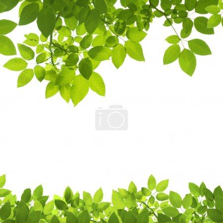 ID de imagem B50439329