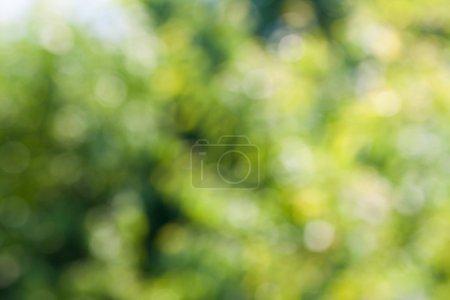 ID de imagem B12562736